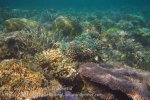 Indo_RA_635_Gam-G30_Near-PE-Corals_20141030_IMG_2617