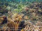Indo_RA_636_Gam-G30_Near-PE-Corals_20141030_IMG_2638