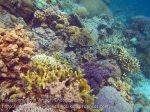 Indo_RA_637_Gam-G30_Near-PE-Corals_20141030_IMG_2660