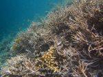 Indo_RA_638_Gam-G30_Near-PE-Corals_20141030_IMG_2637