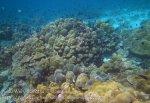 073_1cd_Porites-Coral_20150418_IMG_6828.jpg