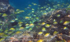 076_1cd_Schooling-Convict-Tang_20150418_IMG_6846.jpg