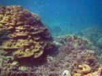 086_1f_Corals_20150418_IMG_6871.jpg