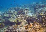 090_1g_Corals_20150418_IMG_6882.jpg