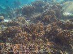 091_1g_Corals_20150418_IMG_6883.jpg