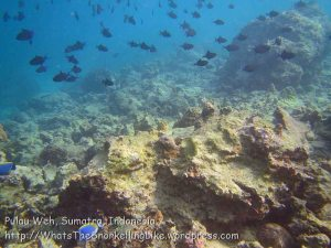 099_1h_Corals-RedtoothTriggerfish_20150418_IMG_6912.jpg