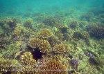 112_2c_Corals_20150418_IMG_6939.jpg