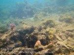 119_3c_Corals_20150420_IMG_7487.jpg