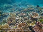 125_3d_Corals_20150418_IMG_6969.jpg