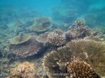126_3d_Corals_20150420_IMG_7491.jpg