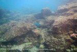 135_4a_Coral-at-Point_20150418_IMG_6981.jpg