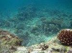 140_4b_Corals_20150415_IMG_6098.jpg
