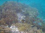 142_4b_RacoonButterflyfish-ManySpottedSweetlips_20150415_IMG_6093.jpg
