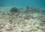 205_4c_Scrappy-Corals_20150415_IMG_6236.jpg