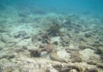 217_4d_Scrappy-Corals_20150415_IMG_6249.jpg