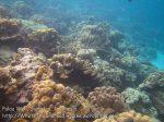 259_5a_Porites-Coral_20150419_IMG_7163.jpg