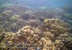 260_5a_Porites-Coral_20150419_IMG_7164.jpg