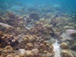 273_5bc_Corals_20150419_IMG_7145.jpg