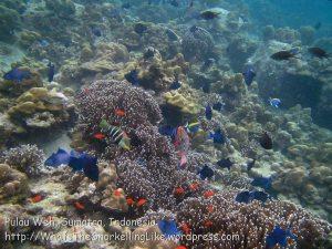 283_5c_Reef_20150419_IMG_7140.jpg