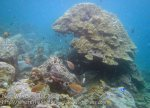 287_5cd_Coral-Head_20150419_IMG_7138.jpg