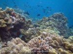 300_5de_Reef_20150419_IMG_7130.jpg