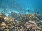 331_6b_Porites-RedToothTriggerfish_20150419_IMG_7092.jpg