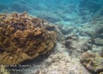 356_6de_Patchy-Coral_20150419_IMG_7074.jpg