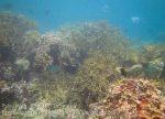 363_6ef_Reef_20150419_IMG_7044.jpg