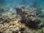 364_6ef_Dead-Coral_20150419_IMG_7045.jpg