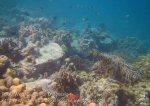 425_7e_Corals_20150416_IMG_6315.jpg