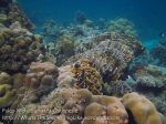 426_7e_Corals_20150416_IMG_6315.jpg