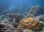 454_7h_Corals_20150416_IMG_6385.jpg