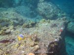 468_7i_Scrappy-Corals_20150416_IMG_6395.jpg