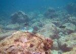 535_7jk_Corals_20150417_IMG_6579.jpg