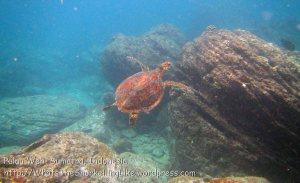 560_7kl_Turtle_20150417_IMG_6604.jpg