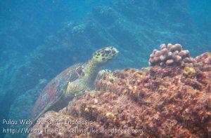 561_7kl_Turtle_20150417_IMG_6606.jpg