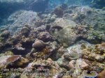 595_7l_Reef_20150417_IMG_6647.jpg