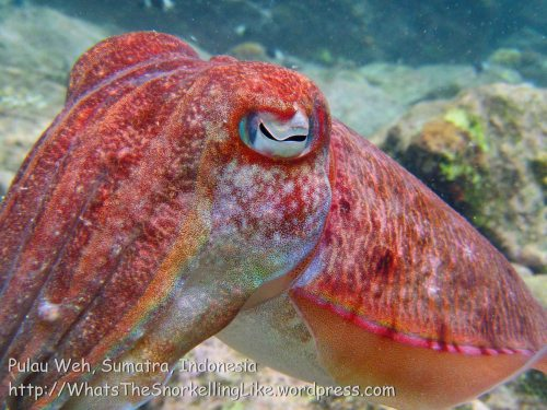 603_7m_Cuttlefish_20150417_IMG_6671.jpg
