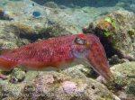605_7m_Cuttlefish_20150417_IMG_6670.jpg