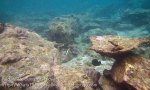 608_7mn_Scrappy-Coral_20150417_IMG_6672.jpg