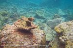 626_7mn_Scrappy-Coral_20150417_IMG_6717.jpg
