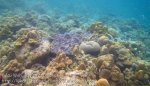 627_7mn_Better-Coral_20150417_IMG_6720.jpg
