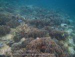 777_8jk_Better-Corals_20150420_IMG_7416.jpg