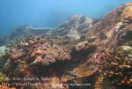 804_Dive_Hard-Corals_20150421_IMG_7553.jpg