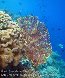 186_Ai-2b_Fan-Coral_20141115_IMG_5335.jpg