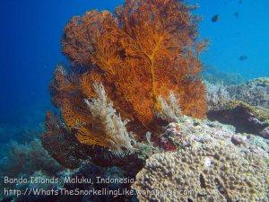 189_Ai-2b_Fan-Corals_20141122_IMG_7086.jpg