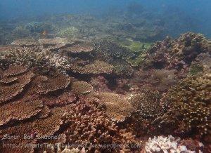 Indo_Bali_030_Sanur_Coral_20160702_P7020736.jpg