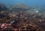 Indo_Bali_036_Sanur_Coral_20160702_P7020752.jpg