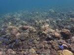 Indo_Bali_108_Jemeluk-3a_Coral_20160810_P8100404.jpg