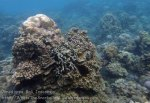 Indo_Bali_120_Jemeluk-3d_Coral_20160810_P8100394.jpg